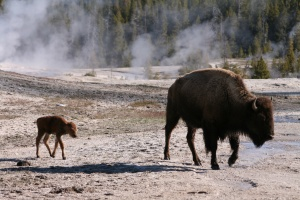 YNP, mother and child